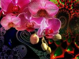 FloralFractals Series #812 by Ninja2401