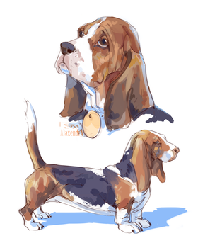 Basset Hound by AlaxendrA