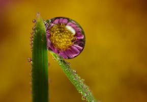 Dew Drop Refraction 16 by Alliec