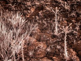 Cracked Soil and New Growth (IR) by KBeezie