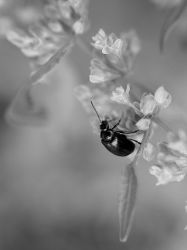 Bug In A Black And White World by Grandmagoingnuts
