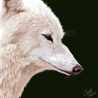 vector wolf by blayrd