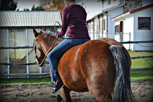 Bay Quarter Horse by EquineGhost