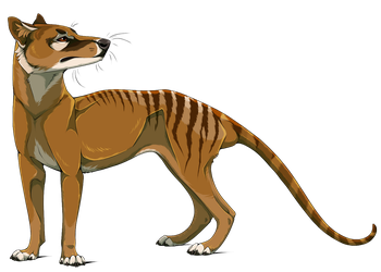 Thylacine by Spirit-Of-Alaska