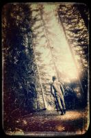 Walk int the woods by DeanMcClelland