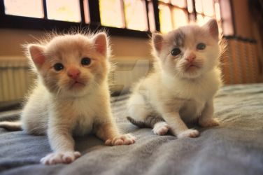 Curious kittens by elybi
