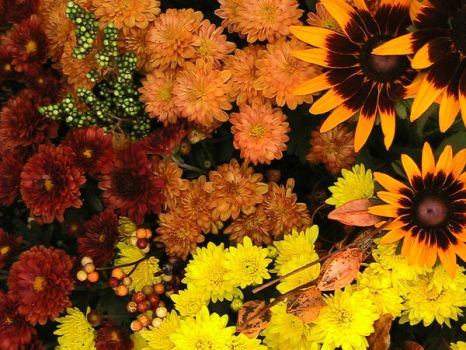 autumn flowers 06 by lormar