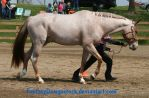 CPO Appaloosa 32 by FantasyDesignStock