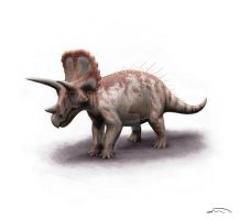 Triceratops by olofmoleman