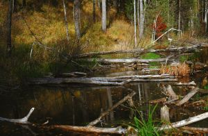 Fallen trees in the water by Tumana-stock