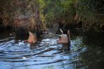 The greatest duck picture ever by oddjester