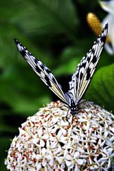 Exotic Butterfly III by manu1993