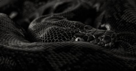 Retic by mant01