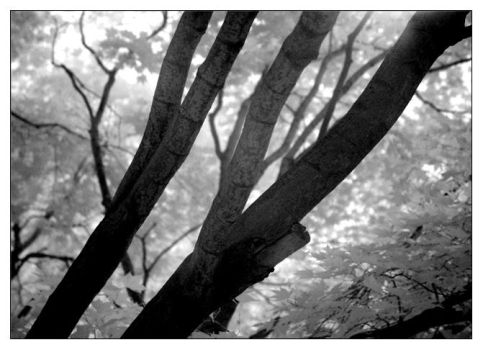 the forest for the trees by sixthsystem