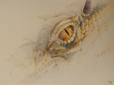 Dragon by TortuRoma