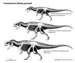 Ceratosaurus growth series