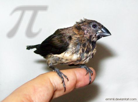 A photo of Pi by emmil