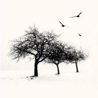 3 trees  3 birds and Winter by incisler