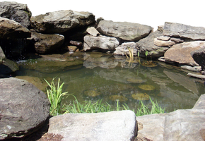 Little Pond and Stones--Pre-Cut by vacuumslayer