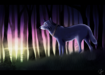 Forest Light by Tiaseg