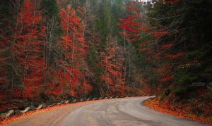 Fall along the road by valiunic