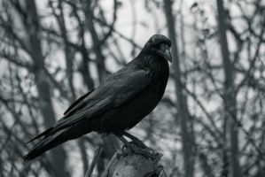 The Raven by MindYourReality