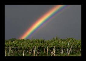 Rainbow in Wine Country by kalany