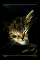 Sleeping Kitten by jimloomis