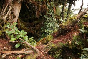 Mossy forest Stock 16 by Malleni-Stock