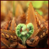 Green Heart by Lilyas