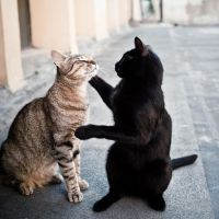 True Lovecats. by TinaApple