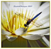 Blue Dragonfly by mariquasunbird1