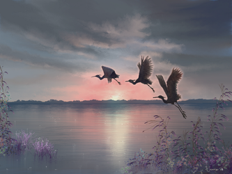 Herons by Sillybilly60