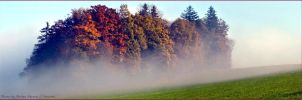 morning fog by brijome