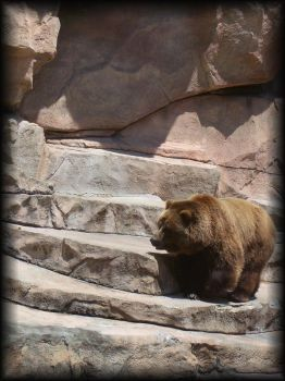 Grizzly Bear 1 by eetap