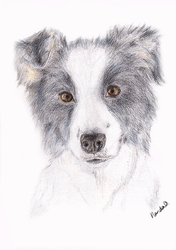 The Collie by Soenanda