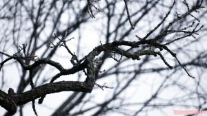 Branch by MidnightRarity