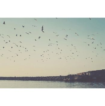 birds by birazhayalci