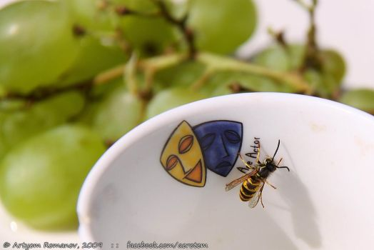 wasp and a cup by aerotem
