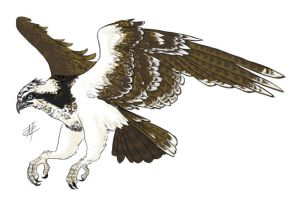 Cyrus the Osprey by White-Sight
