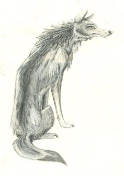 pencil drawing/wolf by heart-reactor