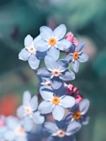 ForgetMeNots by VBmonkey26