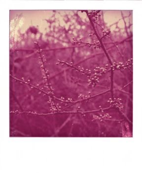 Dipped in Pink polaroid by LeaHenning