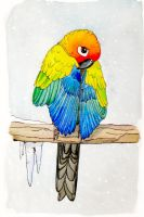 Cold Parrot by greencheek