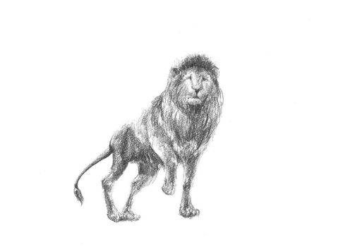 Lion by Fan2sushis