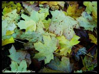 RainyLeaves by ChainsawSurgery