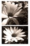 Flowies by helly-photography