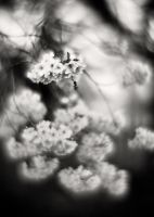 Spring Blossom 02 by HorstSchmier