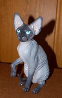Sphynx Cat figurine by Kesa-Godzen