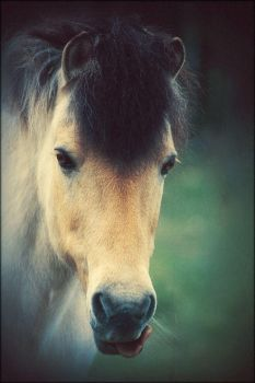 This Is A Horse by JillAuville